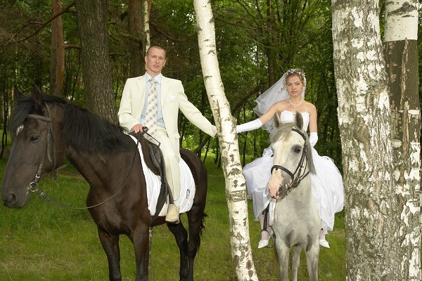 Свадьба лошади