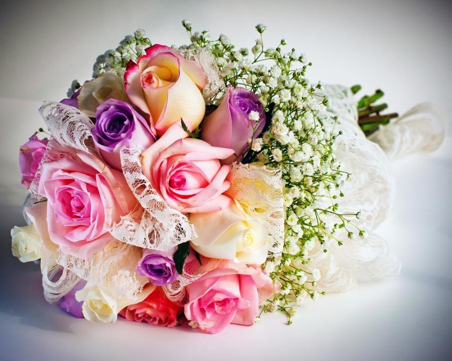 http://flora2000.ru/
