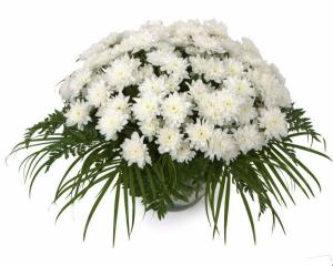 Какие цветы дарить на свадьбу зимой?
