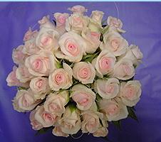 Цветы24