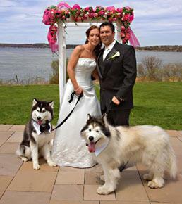 Фото свадьба животных