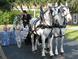 Свадебные фото с лошадью