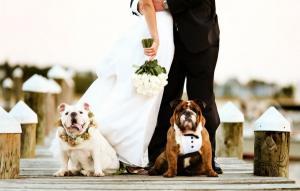 Собаки свидетели на свадьбе