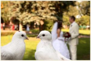 Свадебные голуби фото
